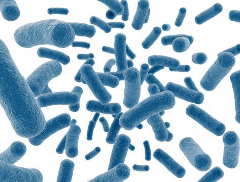 がんにも効く、やせている人だけがもつ腸内細菌を増やすには。