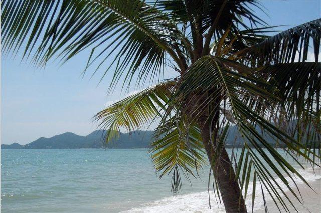 palme-am-strand