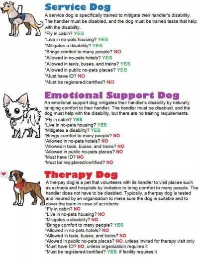 ESA Emotional Support Dog versus Service and MEdical Alert dog public access rights