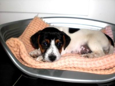 joep de puppy 004