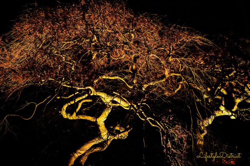 Lifestyle District | Bristol culture & photography blog: Enchanted Xmas CoWheels &emdash; DSC_5136