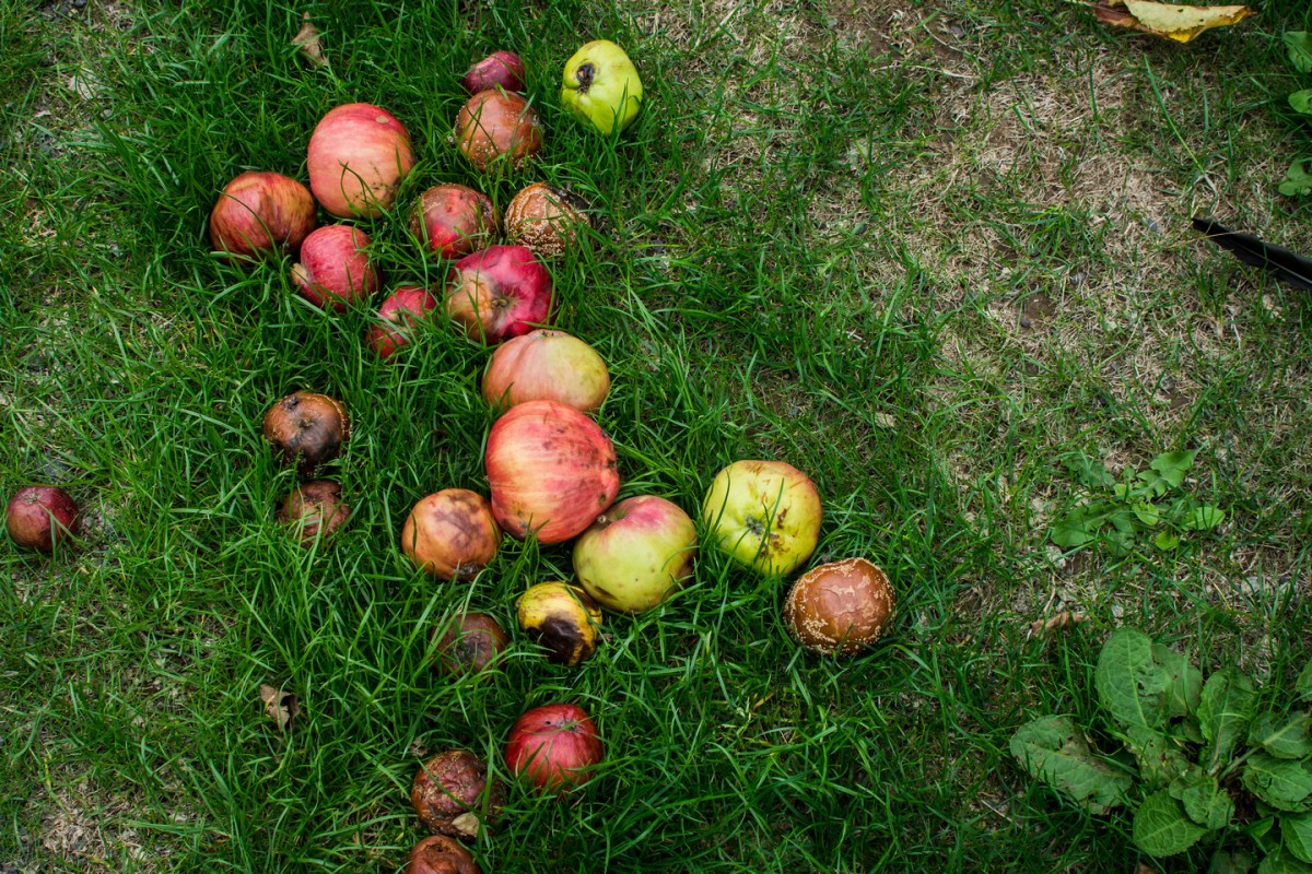 The orchard at the Somerset Rural Life Museum