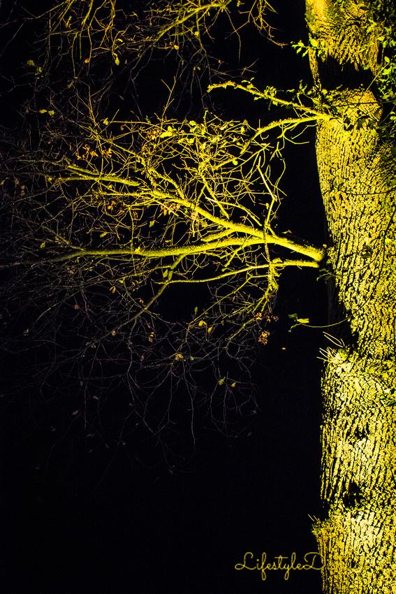 Lifestyle District | Bristol culture & photography blog: Enchanted Xmas CoWheels &emdash; DSC_5220
