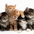 Gatti: il significato del colore del loro manto