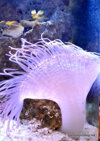 Luminous Jellyfish