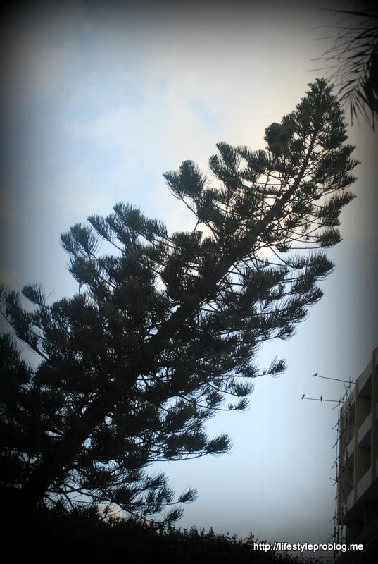 Titled Tree