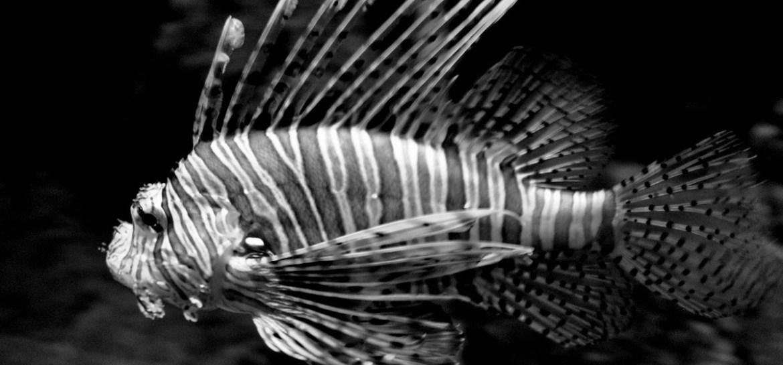 Patterns in Black&White - Cee's Black&White Challenge