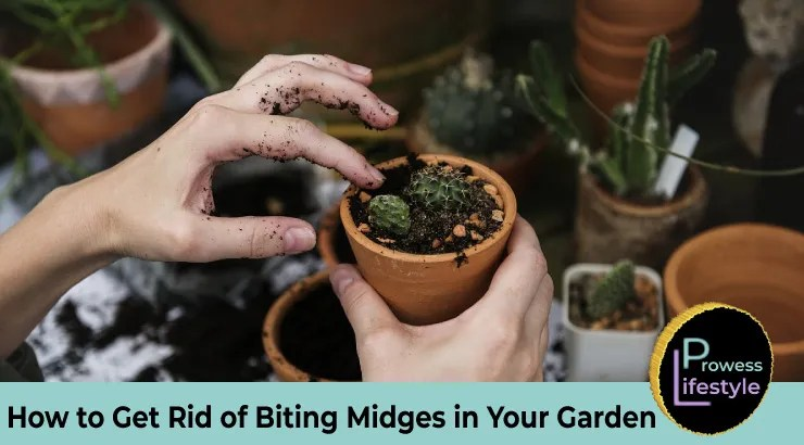 How to Get Rid of Biting Midges in Your Garden