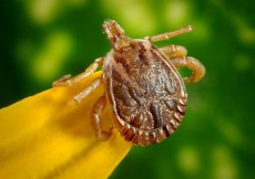 How to Avoid Tick Bites Naturally