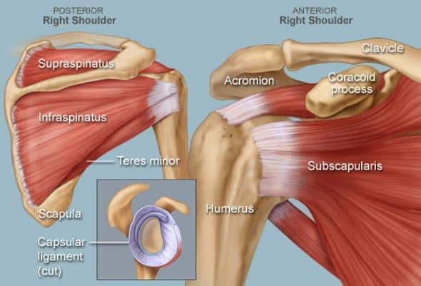 Rotator Cuff Injuries Treatment: How to Manage the Pain & Heal