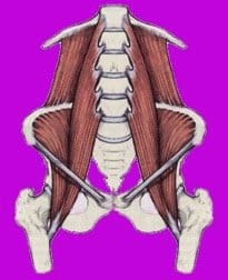 experiencing front of hip pain? here's what's causing it femur bone diagram in the diagram on the left, you are looking at a pelvis, the top of two femurs, the lower back and the bottom ribs this is a belly side or front view