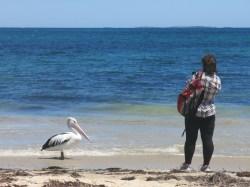 pelican on beach