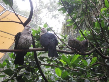 A bunch of birds, hanging out