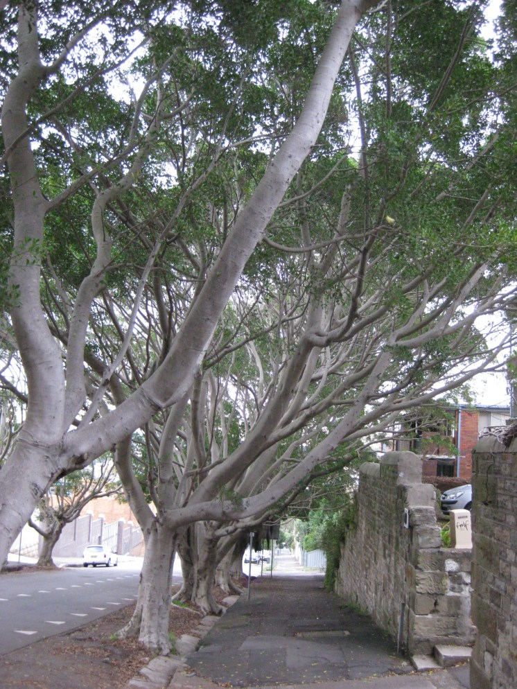 And finally (because I'm obsessed with trees) here's the view going down the hill. Pretty