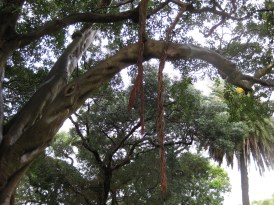 Another angle of the strange tree sac