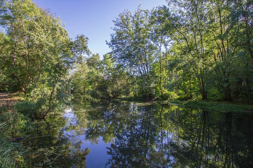 boisements rivulaires, habitats fréquentés par le Vison d'Europe