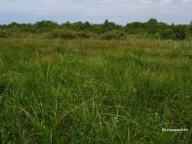 4 hectares d'habitats favorables au Vison d'Europe en cours de restauration dans le marais de l'Anglade !