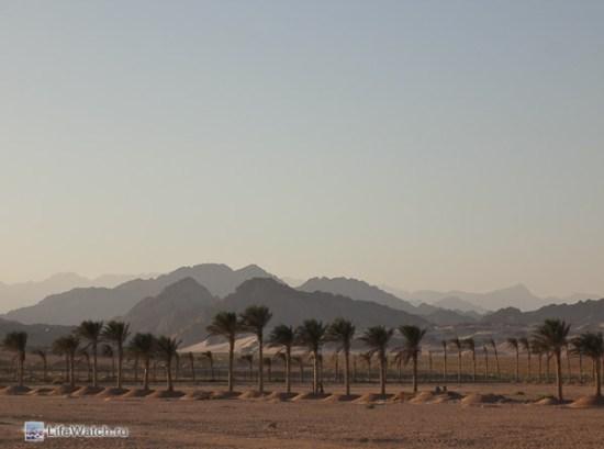 Назову без изысков: Горы и пальмы