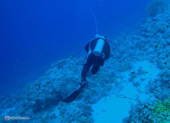 Diver at Gordon reef