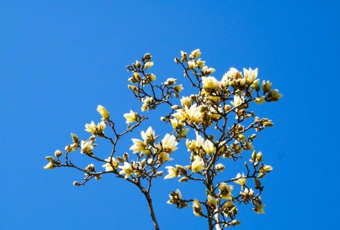 central park flowers blue sky