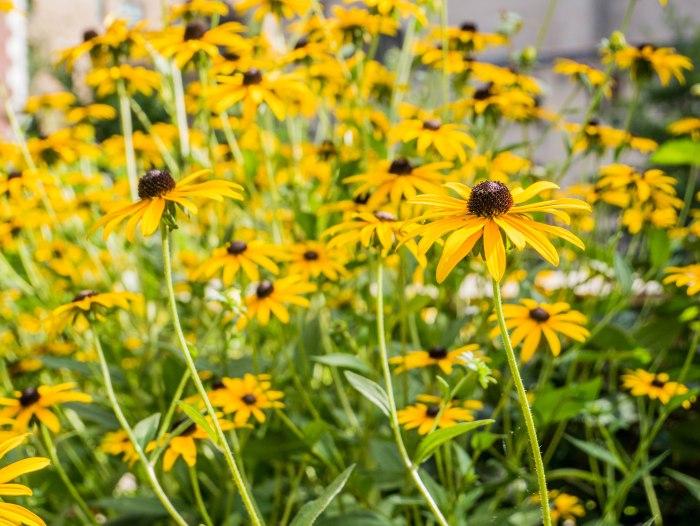 cooper hewitt summer flowers