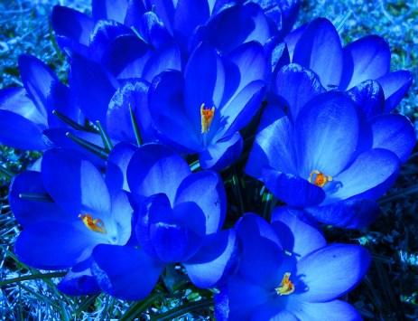 4 Meredith photo blue