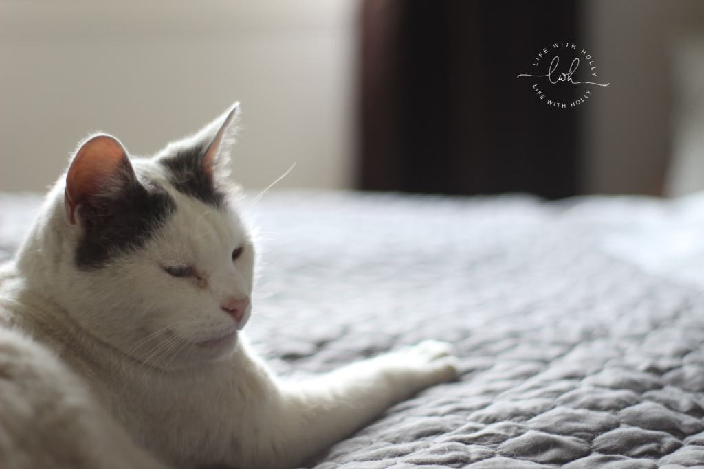 Oscar on Bed -Pets by Life with Holly