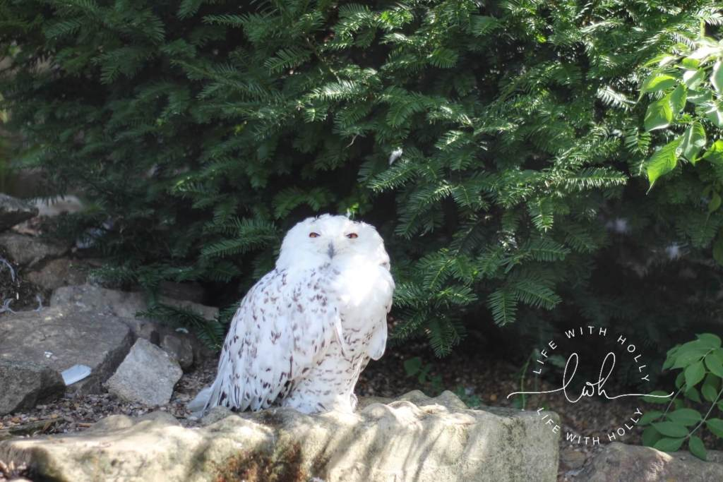Snowy Owl - Hedwig - Sunflowers in Victorian Conservatory - Harewood House - Seeds of Hope Exhibition - Life with Holly Blog