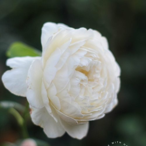 Claire Austin Rose - Life with Holly Blog