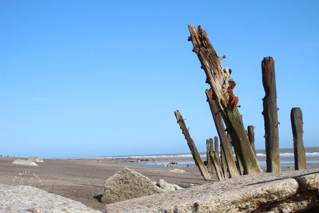 Driftwood Coastal Defences Spurn Point