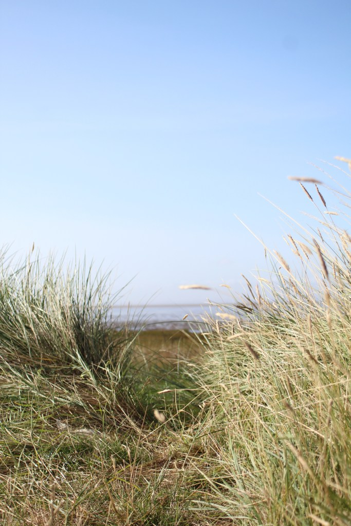 Grasses on Sand Dunes Spurn Lighthouse at Spurn Point by Life with Holly