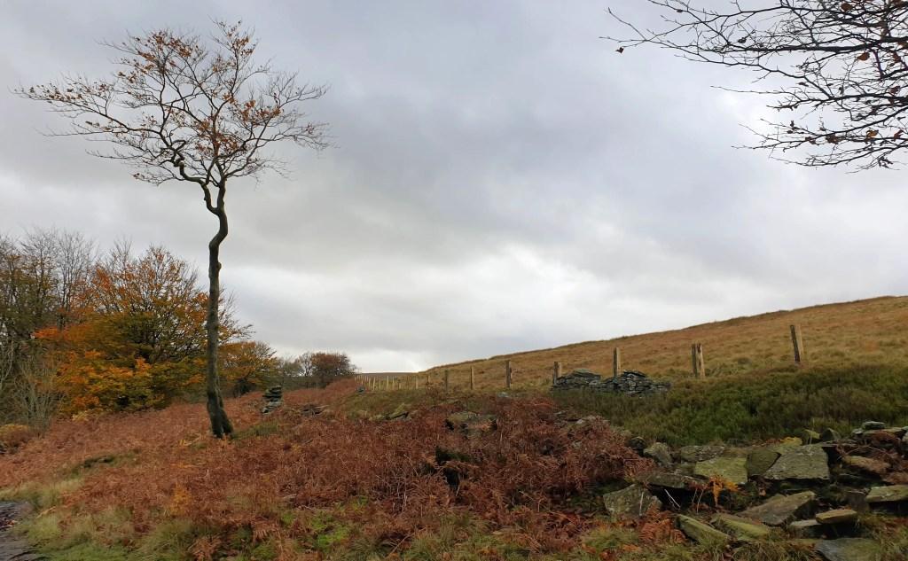 Weekend Wanders at Digley - Moorland and Woodland