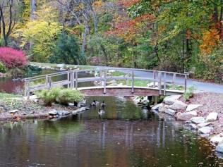 Geese under a footbridge