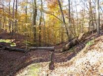 Regional Overlook Park