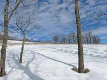 For we are like tree trunks in the snow. In appearance they lie sleekly and a little push should be enough to set them rolling. No, it can't be done, for they are firmly wedded to the ground. But see, even that is only appearance. - Franz Kafka