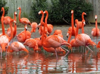 Flamingos, but no bikinis