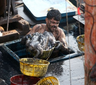 A fisherman covered in squid ink, emptying the hold at the Sassoon Docks in Mumbai.