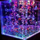 【金魚のイベント】アートアクアリウム!!幻想的な空間と光で金魚を演出!!