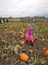 Field trip to a pumpkin patch