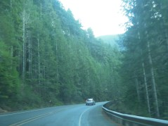 Driving through the Olympic National Forest to get home