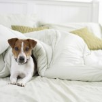 LXP - Lifexpe - pet pets tips and tricks Benefits of having a dog LXP