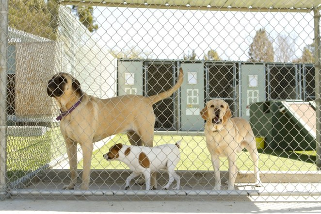 dog boarding kennel pet care