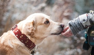 How to Help Motivate Your Dog for Better Training