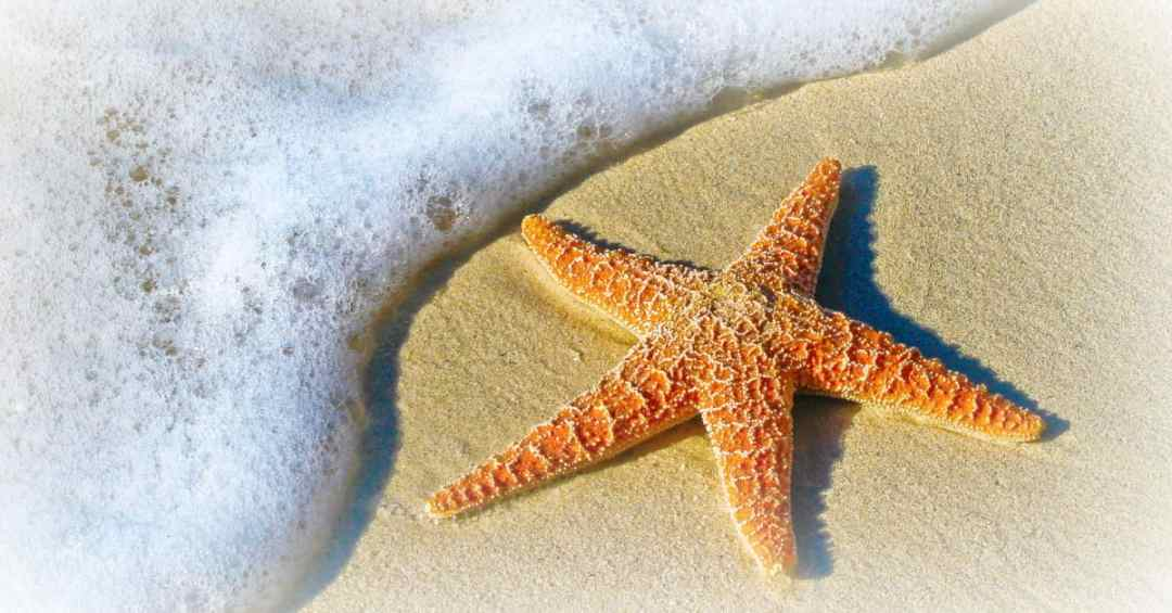 starfish on the sand - life after the cube