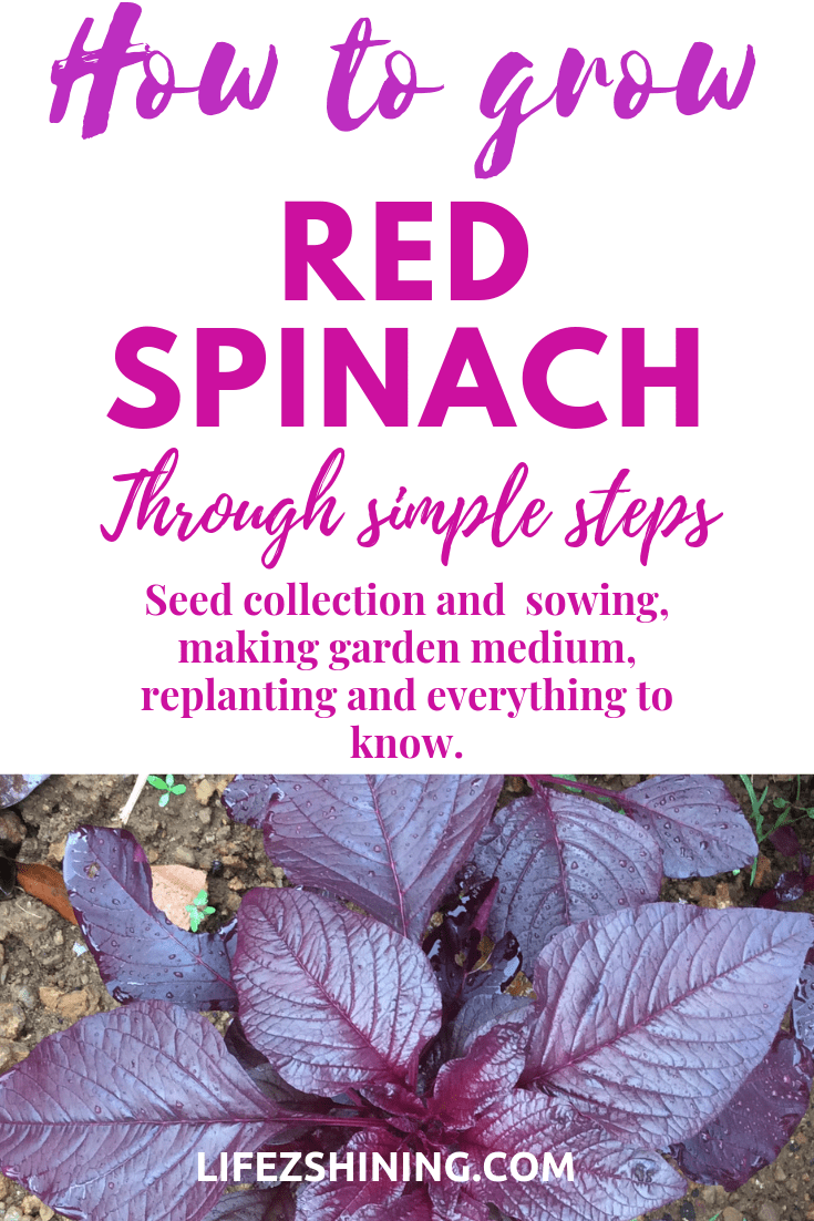 It is easy to grow red spinach your own.