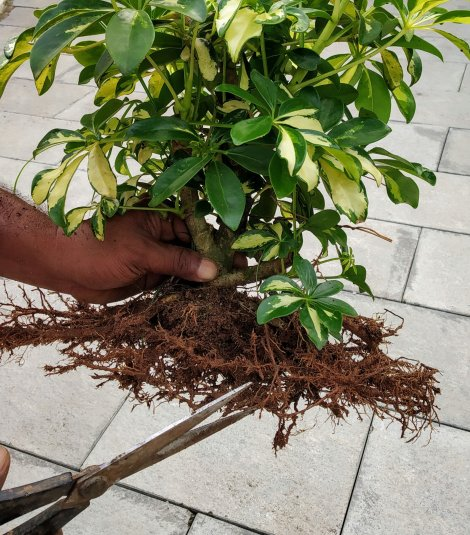 Essential tools for bonsai beginners