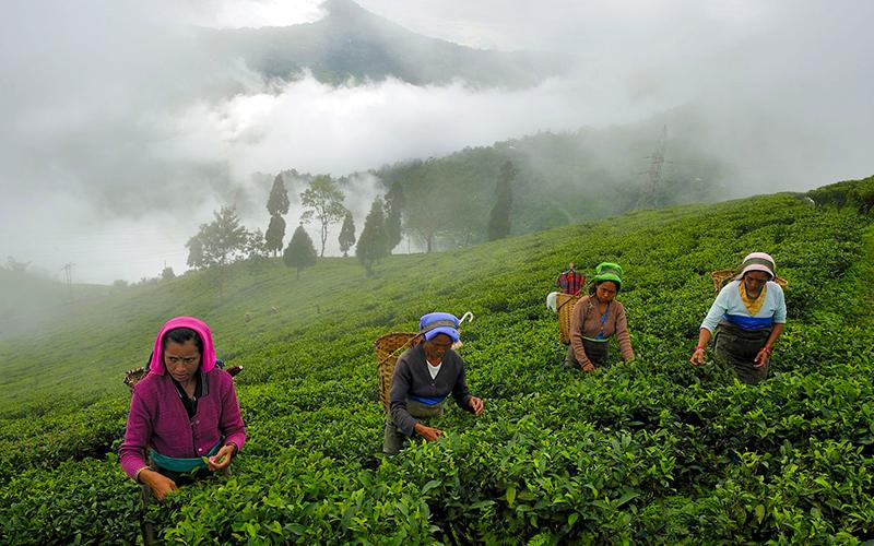 Climb Himalaya via India