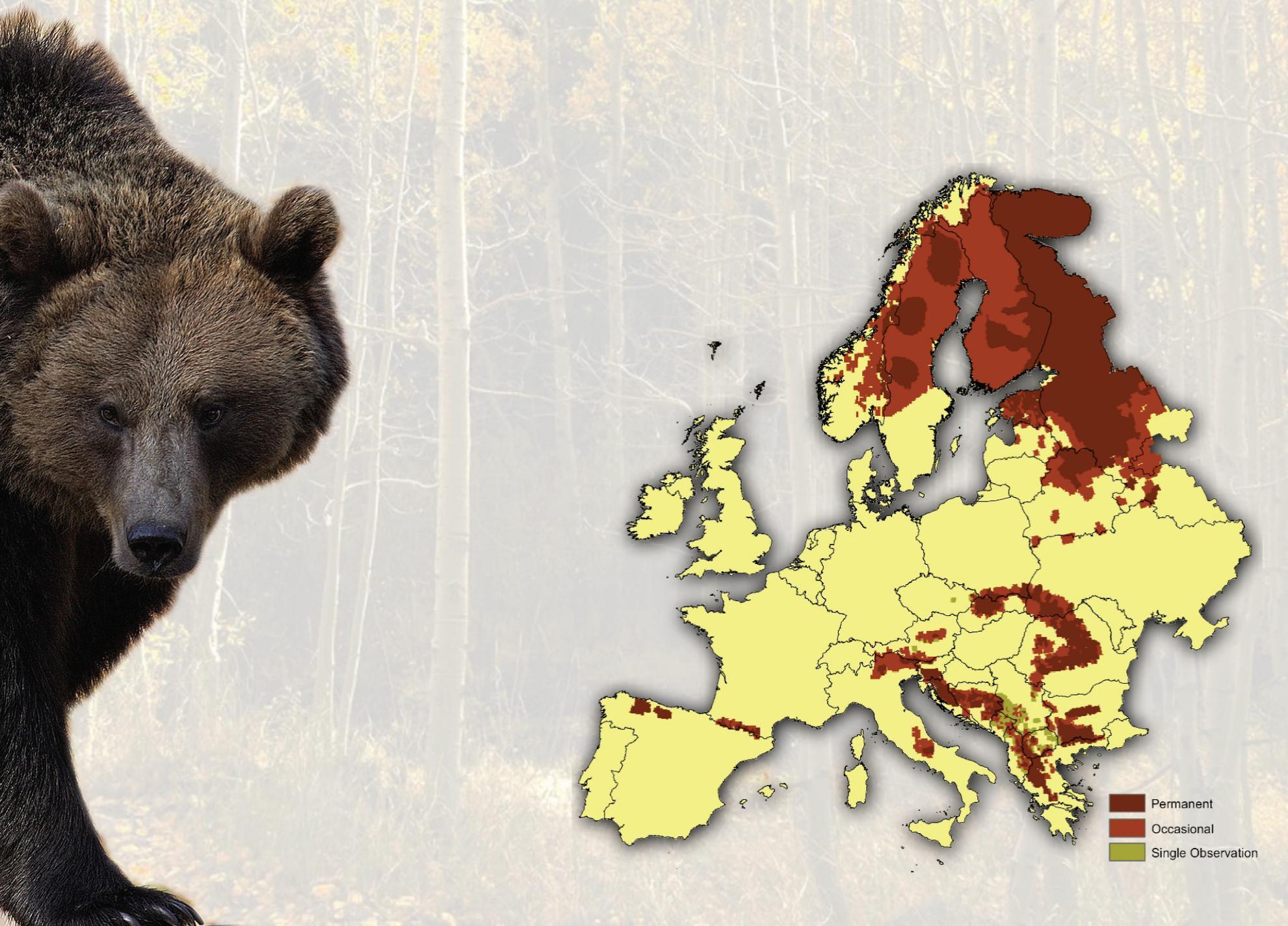 brown-bear-in-eu.jpg