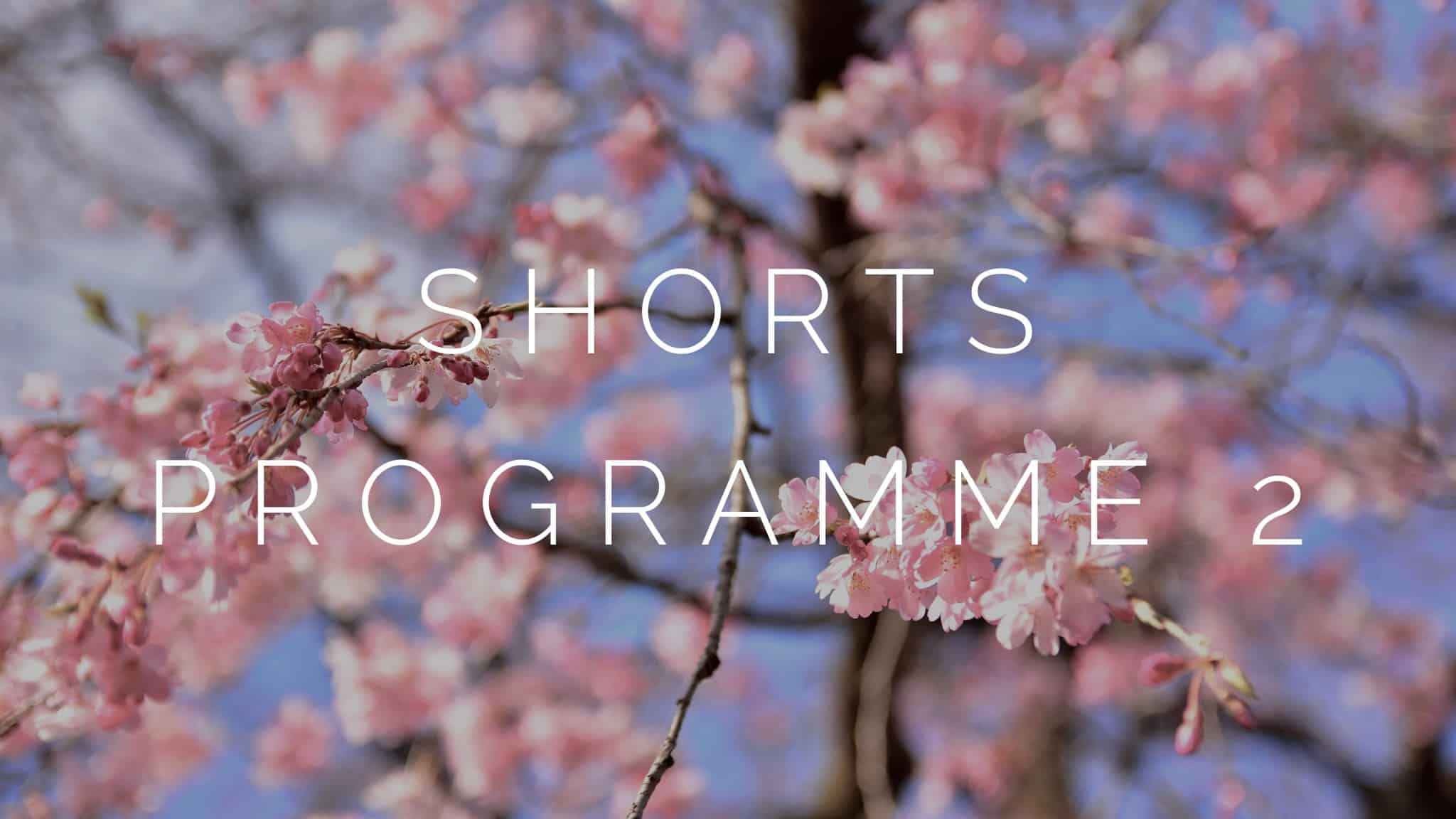 A photograph of cherry blossom to signify the second shorts programme