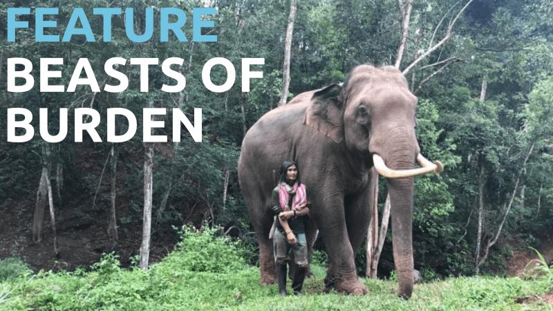 Sydney Lift-Off Film Festival 2018 - Beasts of Burden
